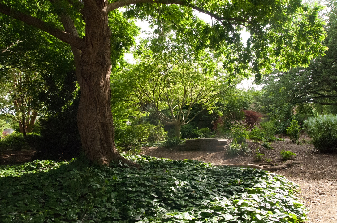 view of the full JCRA shade garden with stone wall