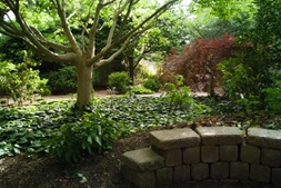 A stone wall presents shorter plants in the JCRA shade garden
