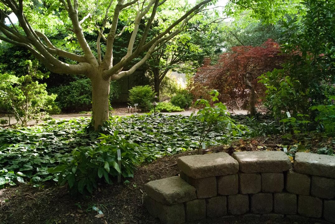A stone wall presents shorter plants in the JCRA shade garden