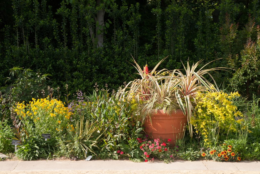 the JCRA perennial border with potted specimen