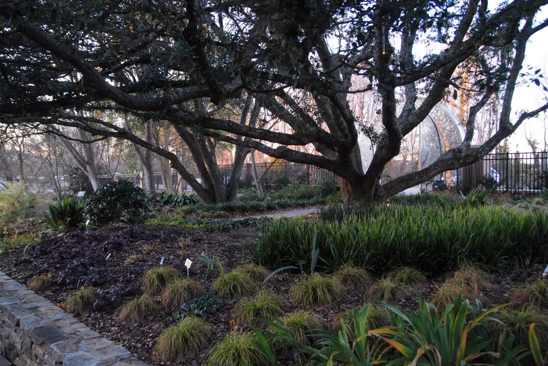 The JC Raulston shade garden during winter.
