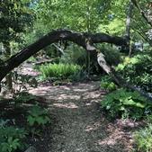 Photograph A: Front Shade Garden