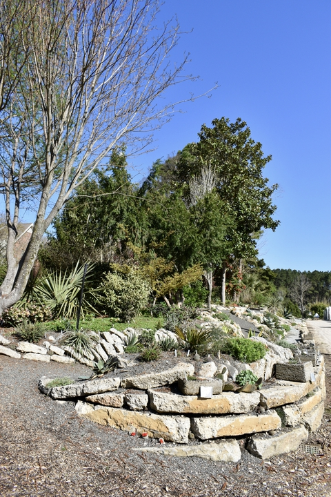 Photograph A: Crevice Garden in late March