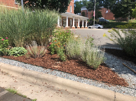 Garden at 14 months (July/2020)
