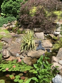 Pond garden full view