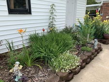 Hardscape Planting