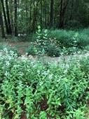 Crowder Park Prairie and Native Plants Garden in the Spring