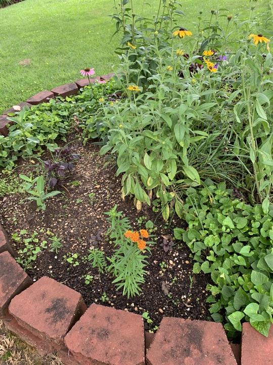 Round garden planting