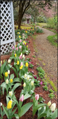 Early Spring Border