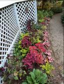 Colorful foliage annual border