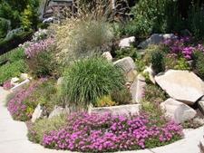 A drought tolerant rock garden incorperating Heather
