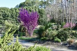 Photograph F: Souto Sun Garden in Spring