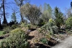 Photograh G: Souto Sun Garden in Spring