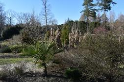 Photograph C: Souto Sun Garden in winter