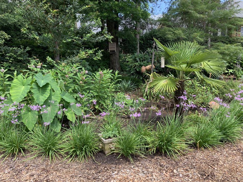 Tropical look garden