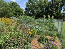 Vegetable garden with pollinator plants