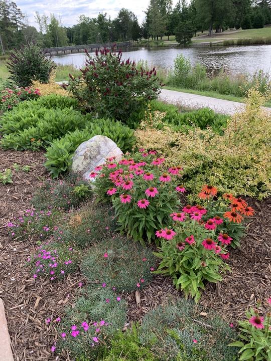Butterfly garden- late spring