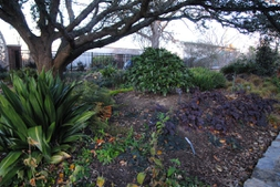 The JCRA shade garden with evergreens in winter