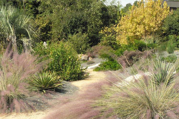 The Xeric garden at the JC Raulston Arboretum.