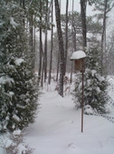winter and snow in backyard woodland garden in Moore County
