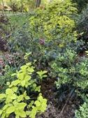 Mixed Foliage Bed
