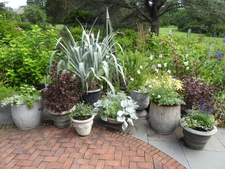 A multi-container garden at the edge of a patio