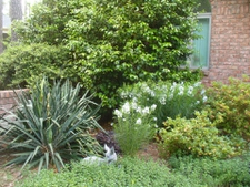 Courtyard Entrance Garden in Moore County in spring