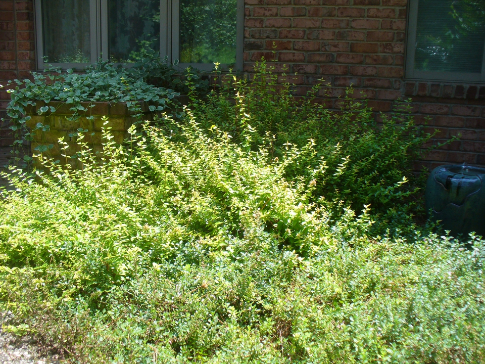 Courtyard Entrance Garden in Moore County in the Summer