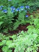 Foliage texture