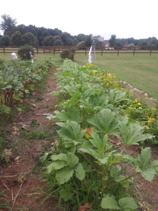 Vegetable No-till Garden