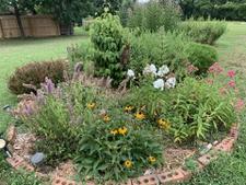 Early June garden