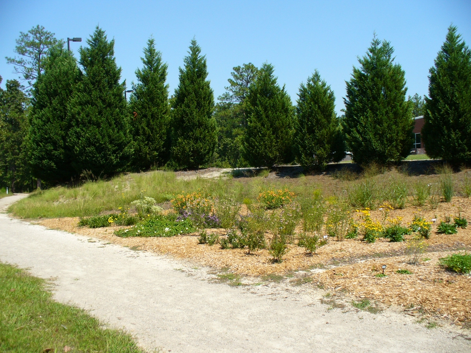 Pollinator habitat shortly after planting (Fall/2008)