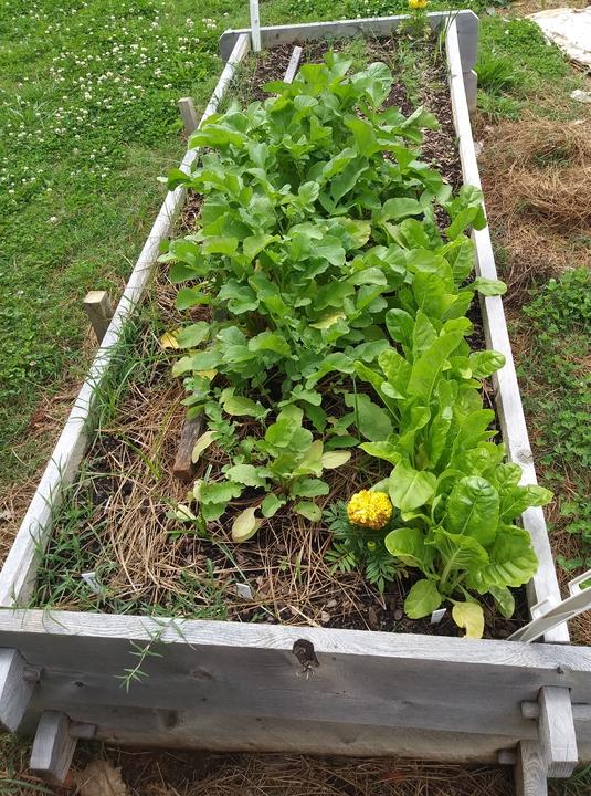 Vegetable No Till Garden