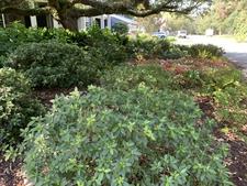 Shade garden under a live oak