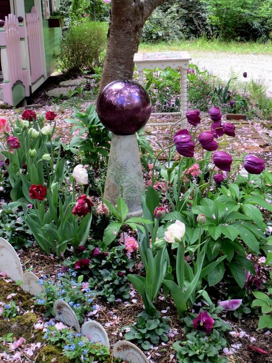 Tulips mark the full swing of spring.
