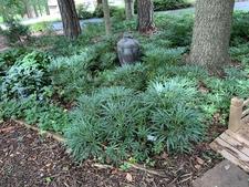 Wild Side Garden