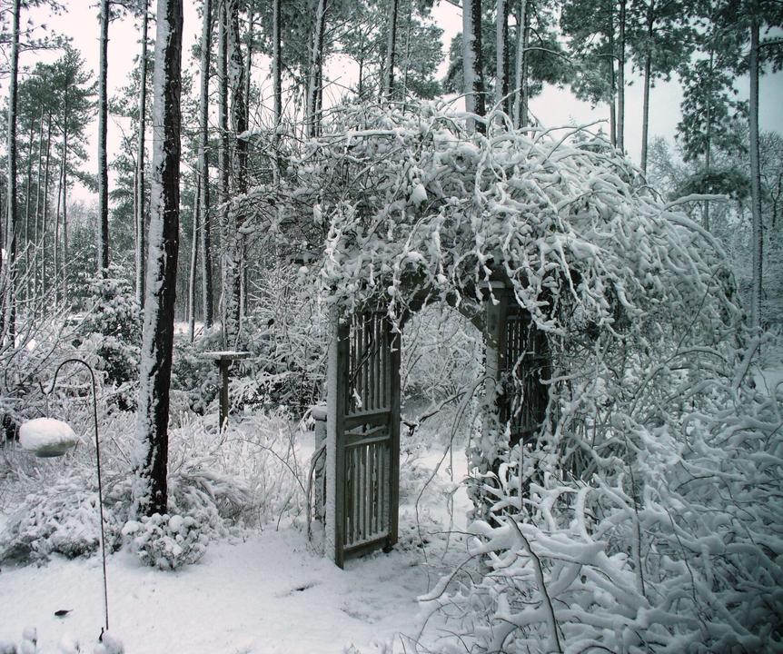 woodland garden in winter of arbor