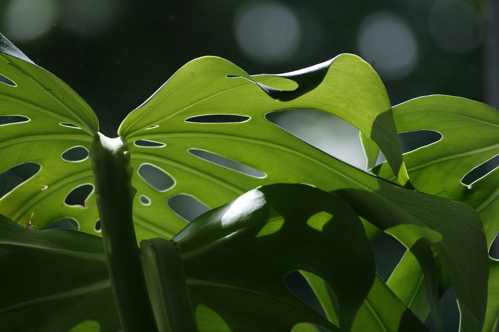 Leaf attachment