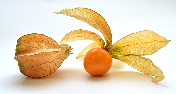 Physalis spp.