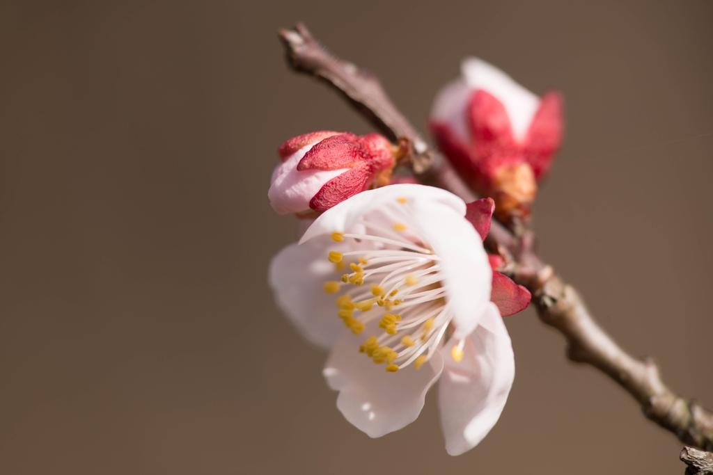 Buds, stem and close up of flower.