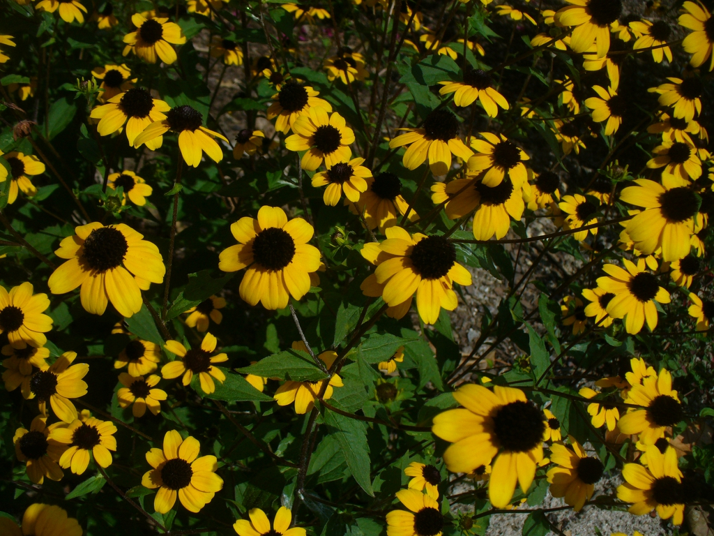 in summer in Moore county: close up of flowers and leaves