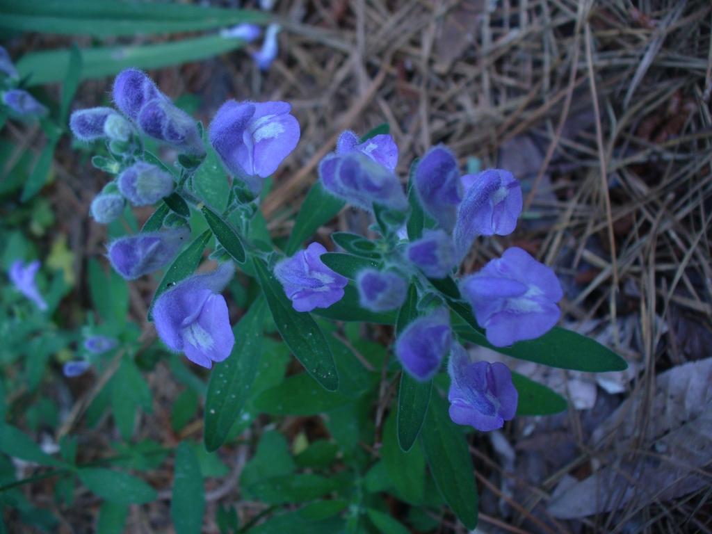 Flowers in spring in Moore County