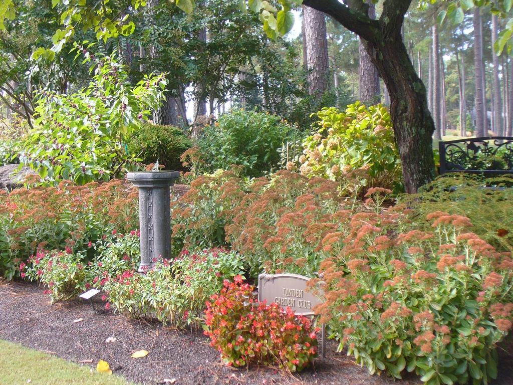Sedum spectabile 'Autumn Joy' in the fall in Moore County