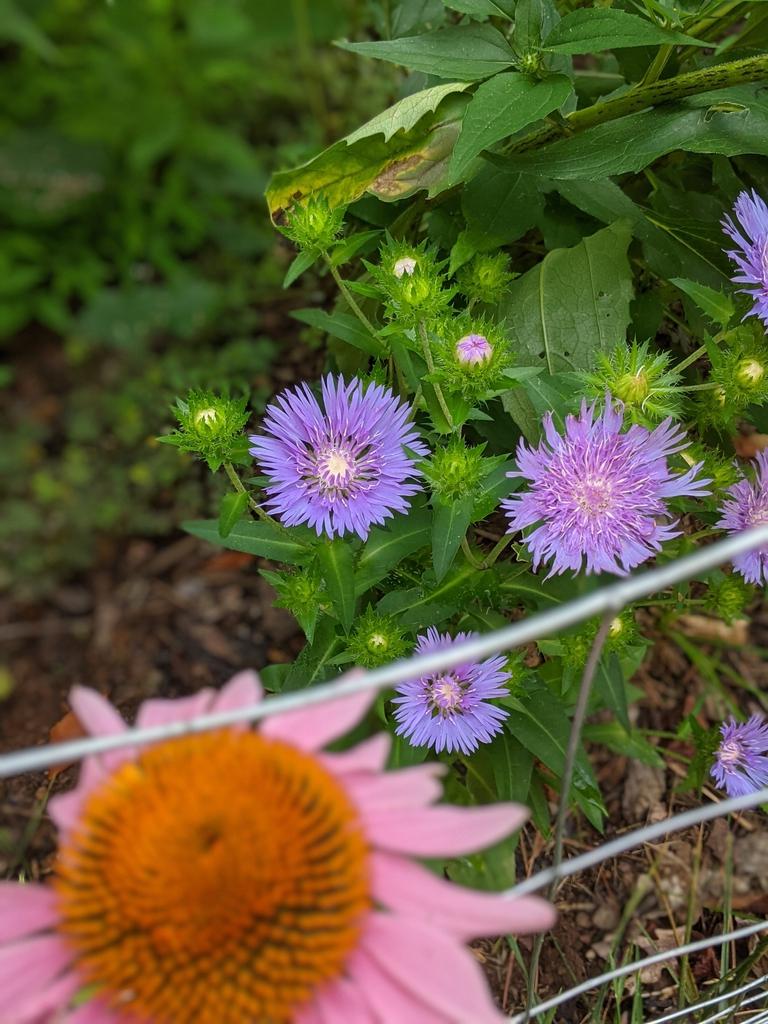 Flowers June 2021 Cabarrus