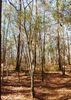 american hornbeam brunswick nature park skdavidson