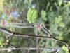Stem and emerging leaf
