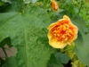 Double flower
