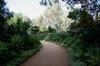 Agave walkway