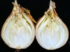 Allium cepa with rot
