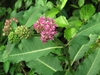 Leaves, buds, flower